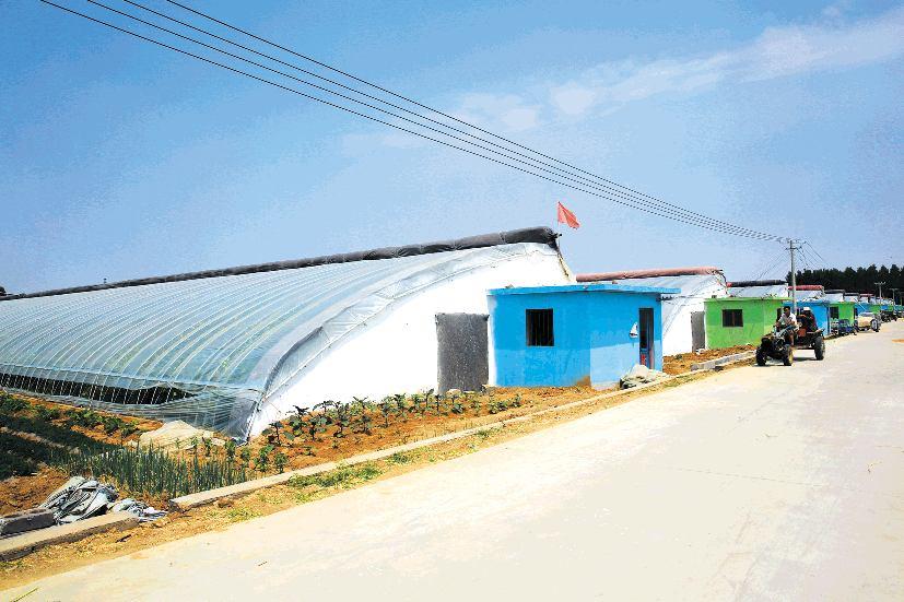 6月19日,农民驾驶拖拉机从渚汀蔬菜大棚扶贫基地经过.